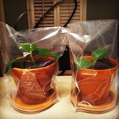 How to propagate hydrangeas with very little effort!! Wow, I love the makeshift greenhouse idea too.