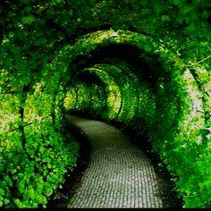 Tía Worrell...el sendero=Path