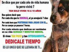 Dedica tiempo a tu perruno!!! FB Unidos por nuestras mascotas
