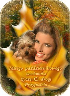 Good Morning Funny, Morning Humor, Movie Posters, Blog, Film Poster, Blogging, Billboard, Film Posters