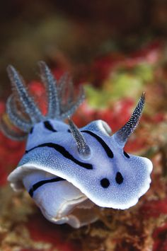 #Nudibranch