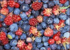 Berry Berry Healthy – Health Benefits of Berries Blueberries, Food Styling, Cancer Causing Foods, Summer Berries, How To Eat Better, Healthy Hair Growth, Cranberries, Eating Habits, Luxembourg
