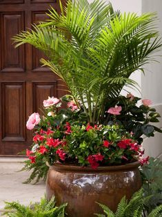 Potted Plants Full Sun, Full Sun Container Plants, Potted Plants Patio, House Plants Decor, Container Flowers, Container Gardening, Full Sun Planters, Flowering Bushes Full Sun, Plants In Pots