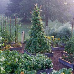 Benefit: Make Your Garden More Attractive