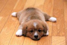 Too much...cuteness!!