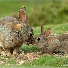 Bunnies Must Know They Are So Cute They Even nuzzle cutely ...
