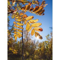 Perfect autumn day . #tromsø #tromsomoment #visittromso #høst #autumn #yrbilder #yrno #nrktroms #thebestofnorway #bestofnorway #nature_brilliance #ig_nordnorge #tromsolove #ig_masterpiece #pocket_allnature #incredible_masterpiece #instanaturefriends #ig_exquisite #magic_shots #excellent_nature #worldprime #jaw_dropping_shots #earthfocus #nature_perfection #special_shots #olympusnorge #olympuscamera #getolympus #myfeatureshoot #landscapesofnorway