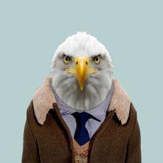 Bald eagle - Zoo Portraits