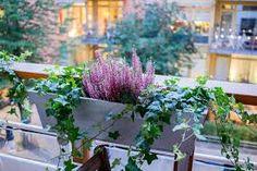 Bildresultat för höstblommor balkong