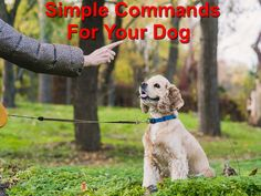 Dog commands are the best ways of kick-starting meaningful communication with your pet. Dog Commands, Wood Animal, Dog Owners, Dog Training, Your Pet, Social Media, Pets, Simple, Exercises