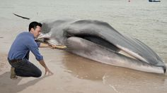 The Kindest Man Alive: Jon Hamm Made Crepes For A Beached Whale - Click to read this story!