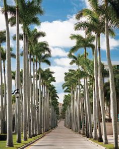 ELLE DECOR GOES TO PALM BEACH    Royal Palm Way, lined with the towering palms that lent the town its name.