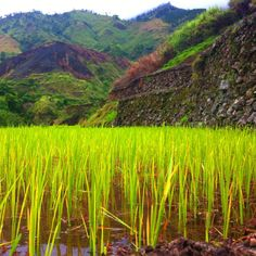 Rice Terraces at Kalinga, Philippines #travel #Philippines #mountains