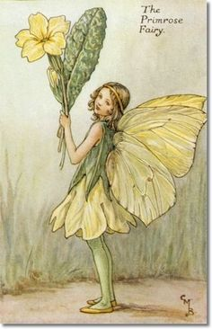 Illustration for the Primrose Fairy from Flower Fairies of the Spring. A girl fairy stands facing left holding a bunch of primroses.- Cicely Mary Barker FF Spring 10 1923 Cicely Mary Barker, Flower Fairies, Vintage Fairies, Vintage Flowers, Vintage Art, Vintage Children's Books, Art Flowers, Vintage Paper, Vintage Prints
