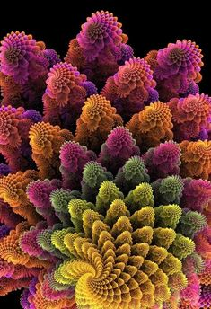 Another textured fractal and the basis for my work with clay art Fractals In Nature, Spirals In Nature, Fractal Images, Fractal Art, Fractal Geometry, Sacred Geometry, Psychedelic Art, Patterns In Nature, Textures Patterns