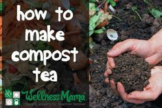 Gardening Compost How to make compost tea for gut health! - Compost tea is an excellent source of soil based probiotics and may be the missing link in solving leaky gut and autoimmune problems. Compost Tea, Garden Compost, Garden Pests, Organic Vegetables, Growing Vegetables, Organic Fruit, Gardening Supplies, Gardening Tips, Organic Insecticide