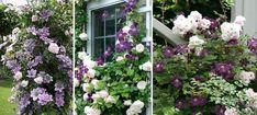 Rosor och klematis i rosa och blått Outdoor Structures, Plants, Garden Ideas, Planting Flowers, Plant, Landscaping Ideas, Backyard Ideas, Planets