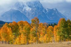 Grand Teton National Park. #autumn - 10 Gorgeous Photos of National Parks in the Fall