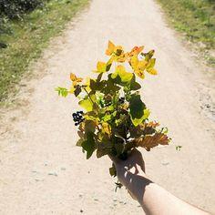Mirad los colores de la naturaleza cuando les toca el sol, es belleza pura 🌱 ¡Feliz fin de semana! . . . #nature #abitofnature #beautyofnature #natureinspiration #naturalezaqueinspira #activemeditation #morningwalks  #vidadepueblo #morningsun #ouiclementine