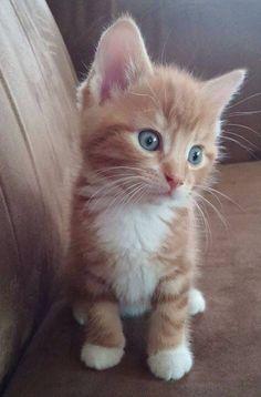 Gatos..Gatos Y Mas Gatos..