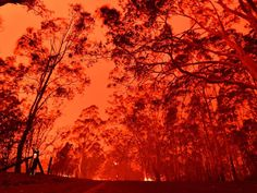 Australian fires: Everything we know and how you can help - Bushfires have been ravaging the country for months, devastating towns, rural communities and livelihoods. Here are the best ways to help. Fire Image, Australian Bush, Kangaroo Island, Fire Trucks, Climate Change, Burns, Wildlife, Country Roads, Play Therapy