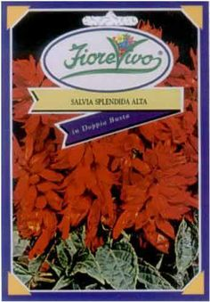 Salvia Splendida Alta - Semilandia