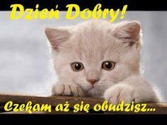 Good Night Friends Images, Dory, Good Morning, Nostalgia, Pictures, Animals, Poland, Facebook, Fotografia