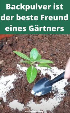 Organic Vegetables, Growing Vegetables, Garden Yard Ideas, Lawn And Garden, Growing Flowers, Planting Flowers, Flower Gardening, Gemüseanbau In Kübeln, Inside Plants