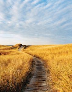 Dunes play a vital role in stabilizing beaches that are battered by winter storms. Here, at Aquinna, on Martha's Vineyard, they form the timeless frame of American seascape