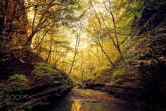 Mantra of Autumn by AnthonyPresley. @go4fotos