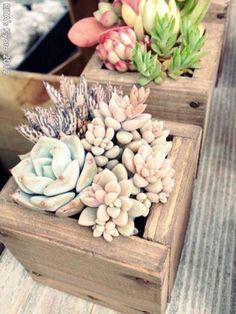 Beauty Succulents Pots Arrangement Tips 51