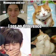[National Cat Day] 10 idols and their cat doppelgangers Hyun Soo, Infinite Members, Kim Myungsoo, National Cat Day, Nostalgia, All About Kpop, Kdrama Memes, Meme Center, K Idols