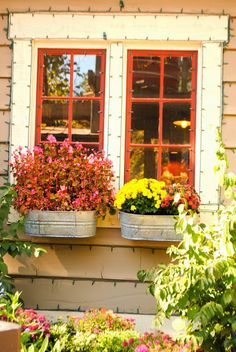 the rosy life - galvanized buckets as window boxes