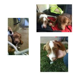 From Odessa Texas shelter on Death row to ♡ WE ARE RESCUED AND LOVING IT ♡