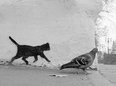 unconcerned pigeon strolling past little black cat street art...