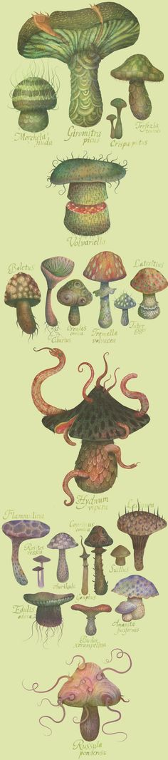 "Created with watercolor, colored pencils and Photoshop, ""The Fungus Kingdom"" by Serbian artist Vladimir is an artistic rendering of what wou. Nature Illustration, Botanical Illustration, Merian, Mushroom Art, Fairy Land, Mellow Yellow, Botanical Prints, Fungi, Vintage Prints"