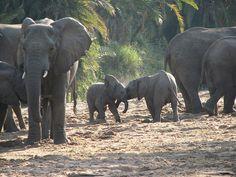 cute baby elephants!