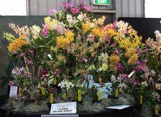 Australian Native Orchids - Henk van den Berg by cskk, via Flickr
