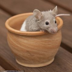 Waiter there's a mouse in my soup: Hopefully the customers had no nasty surprises during their meals