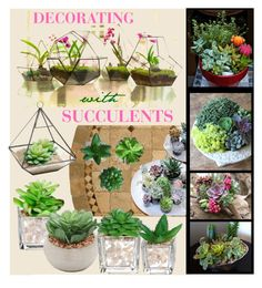 """""""Decorating With Succulents"""" by bb60477 ❤ liked on Polyvore featuring interior, interiors, interior design, home, home decor and interior decorating"""