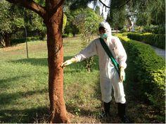บริษัทกำจัดปลวก MINIBUG CO.,LTD ให้บริการ กำจัดปลวก และแมลง