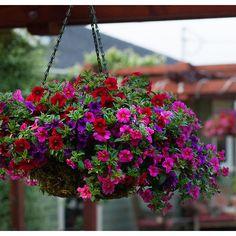 HGTV Home Confetti Craze Plants