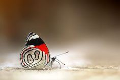 88 Butterfly by Boris Godfroid