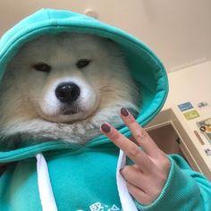 Funny Animal Jokes, Funny Dog Memes, Cute Memes, Cute Funny Animals, Funny Dogs, Cute Cats, Not Funny, Super Cute Puppies, Cute Baby Dogs