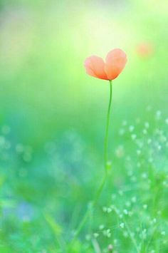 Y te asomaste tú a mi vida, ,,,,y vi el mundo de otro color, ,,,,