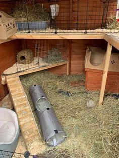 Bunny Sheds, Rabbit Shed, Rabbit Hutch Plans, Rabbit Hutches, Pet Rabbit, Bunny Cages, Rabbit Cages, Diy Guinea Pig Cage, Guinea Pigs