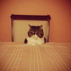 Cat Demands A Lot of House Staff