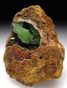 Anapaite in Fossil Bivalve from Kertch, Crimea, Ukraine [db_pics/pics/e601a.jpg]