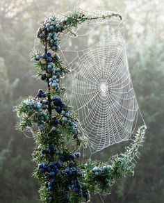 This Ivy House- April 4  spiderweb