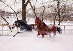 Wild horses in Comana Park, Romania Winter Goddess, Winter Art, Wild Horses, Winter Is Coming, Romania, Animals Beautiful, Winter Wonderland, Waves, Photography